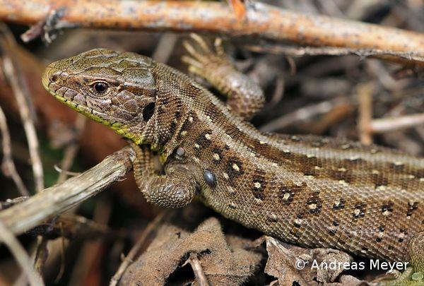 Reptilien Biodivers